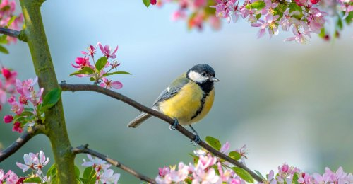 Nature Society Proposes Renaming Birds Named After Slave Owners