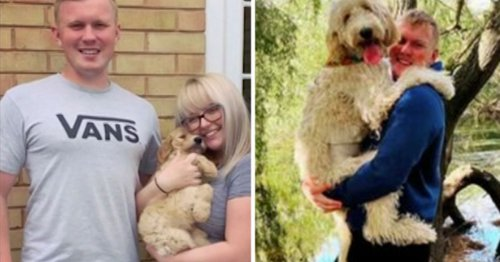 Woman buys 'cockapoo' in lockdown only to see it grow as big as a baby rhino