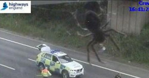 'Gigantic' spider invades motorway in apocalyptic scenes – it's not all it seems