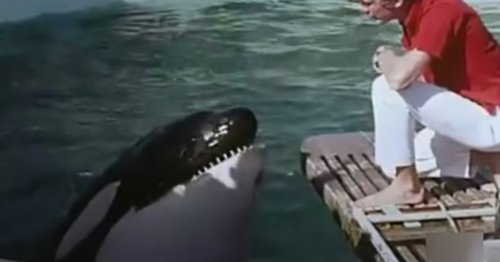 Killer whale who tried to bite trainers 'killed himself' by head-butting tank