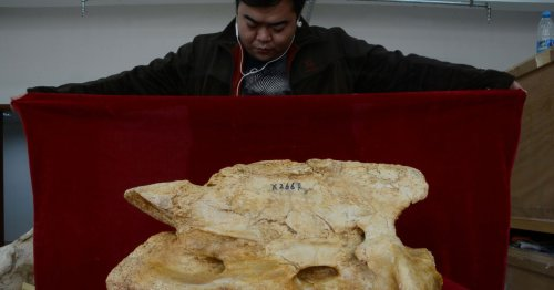 Giant 20ft rhino fossils unearthed in Chinese region famous for 'dragon bones'