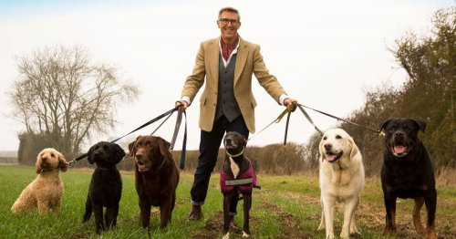 'Dogfather' Graeme Hall shares top tip for training aggressive dogs