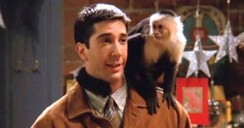Friends Reunion: David Schwimmer admits secret hatred for Marcel the monkey