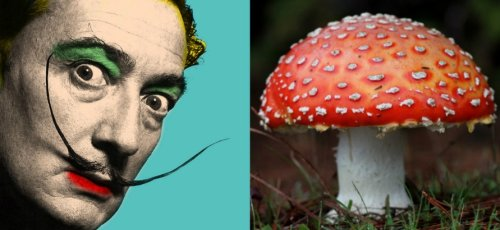 Salvador Dalí goes in search of a psychedelic mushroom in 'Impressions of Upper Mongolia'