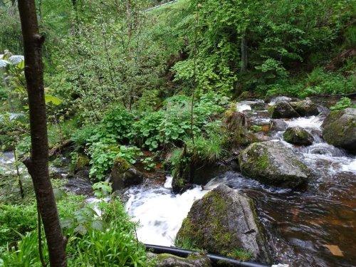 U(h)rwaldpfad: wandern im Schwarzwald