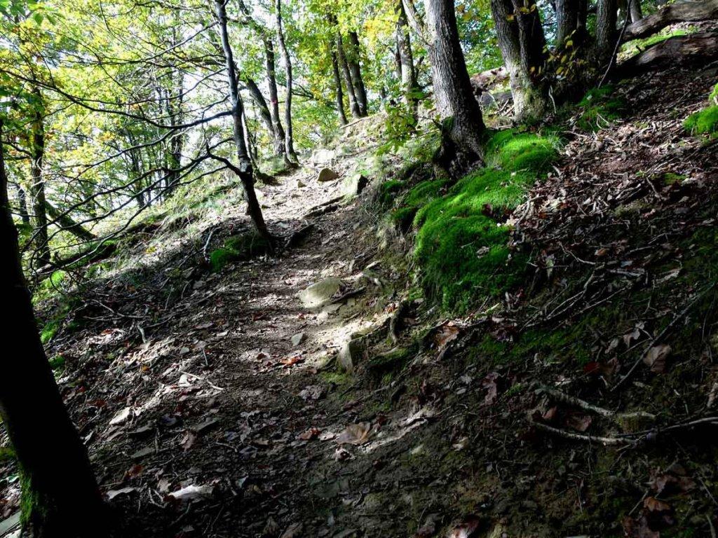 ||Wandern im Bergischen Land