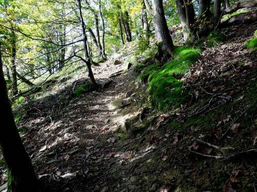 Wandern/Hiking cover image