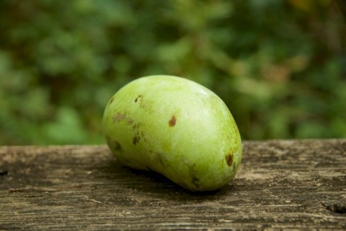 Where To Find Pawpaws In The DC Area This Season | DCist