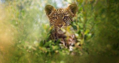 Netflix Nature Series 'Animal' Gets Release Date; Narrators Include Bryan Cranston, Rashida Jones, Rebel Wilson & Pedro Pascal