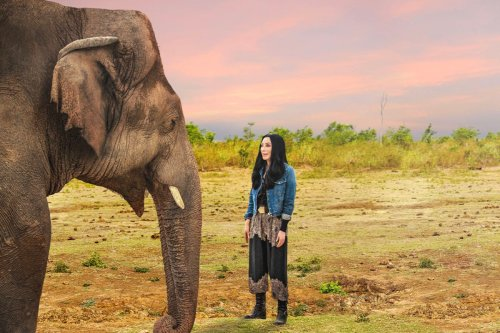 How to Watch 'Cher and the Loneliest Elephant'