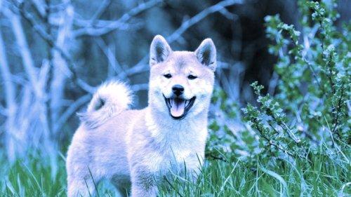 Dogecoin Knockoff Puts $8 Billion in Ethereum Founder Buterin's Wallet - Decrypt