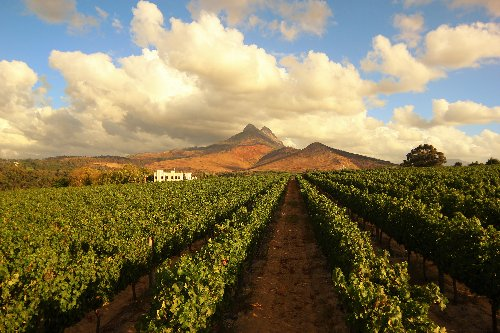 Meet the Winemaker Behind One of the Most Exceptional Wineries in South Africa