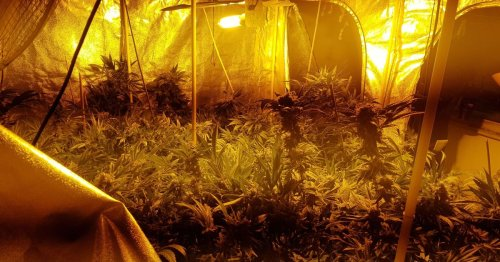 City of Derby tops list of where Derbyshire police found the most cannabis farms