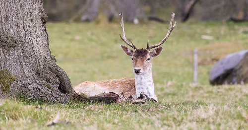 Police warning after spike in deer collisions
