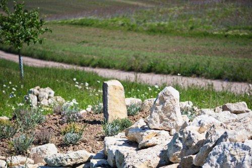 Trockenmauer für Insekten und Eidechsen in Selzen #Fotomontag 21/22