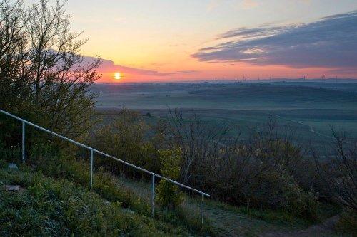 Wandern zum Petersberg und zu den Wildtulpen bei Gau-Odernheim