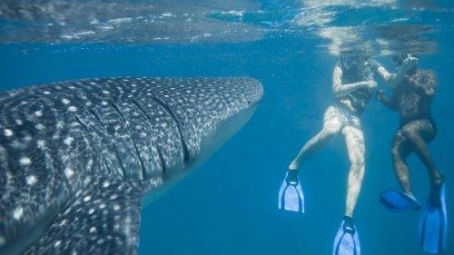 Urlaub in den USA: Studentin macht Instagram-Selfies im Meer – plötzlich taucht ein Hai auf!