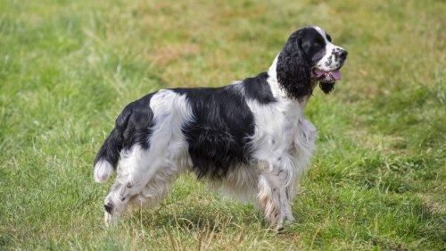 Hund: Welpe stürzt bei Wanderung 100 Meter in die Tiefe – es kommt zum Wunder