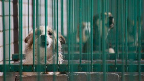 Hund in Bochum: Zwei Hunde freuen sich riesig, als sie sich im Tierheim wiedersehen
