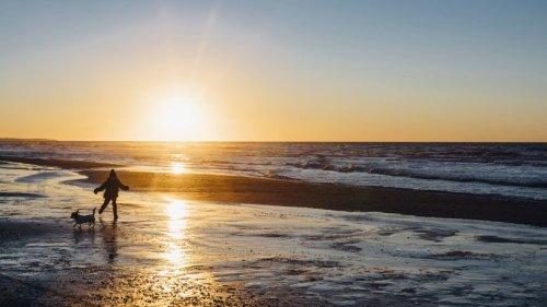 Hund: Terrier will im Meer planschen – was dann mit ihm passiert, ist fatal