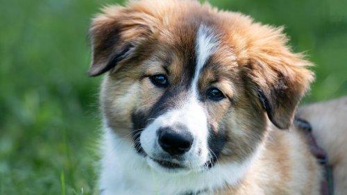 """Hund: Niemand will """"Marley"""" aus Tierheim holen – DAS ist der traurige Grund"""