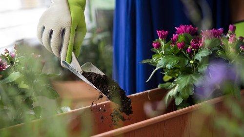Wetter im Ruhrgebiet: Blumen richtig pflanzen – machst auch du diesen Fehler?