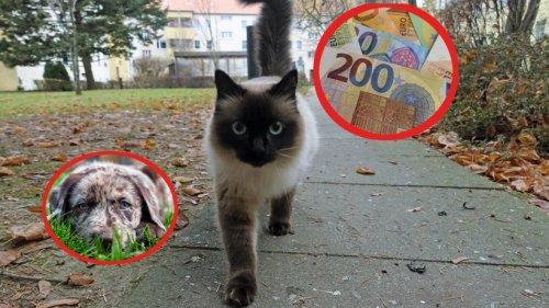 Hund, Katze und Co.: So viel kostet dich dein Haustier jährlich – es ist mehr, als du vermutlich denkst!
