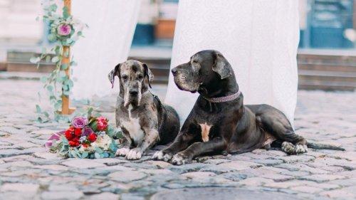 Hochzeit: Frau lädt Hunde zur Trauung ein – SIE müssen dafür Zuhause bleiben