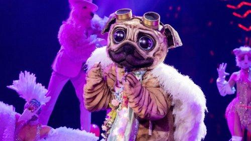 """Der Mops"" bei ""The Masked Singer"": Fans sicher – ER steckt unter der Maske"