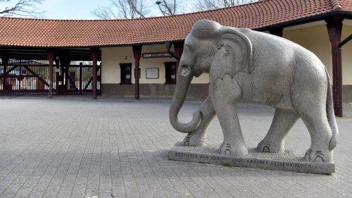 """Zoom Gelsenkirchen: Besucher haben Sorgen um Tierbabys – """"Angst bei mir ist groß"""""""