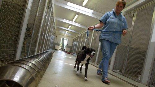 Hund findet kein Zuhause – so herzergreifend verlief Buddys Leben bisher