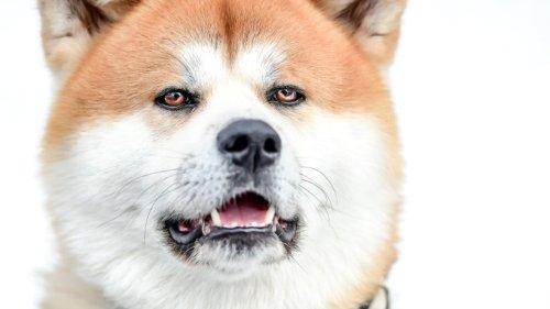 Hund: Tödliches Drama! Mann spielt mit Vierbeiner – und stirbt durch Kratzer