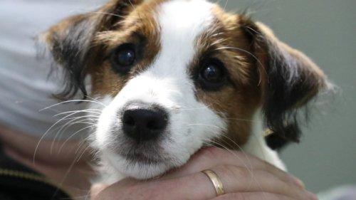 """Hund: Niemand möchte """"Marley"""" aufnehmen – aus diesem traurigen Grund"""