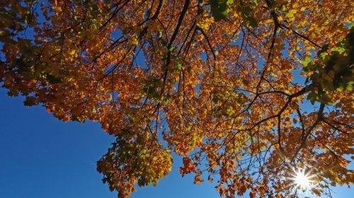 Wetter in NRW: Nach Regenschauern im grauen Herbst – das erwartet dich am Wochenende