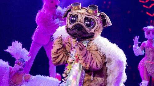 """""""Der Mops"""" bei """"The Masked Singer"""": Fans sind sicher – ER steckt unter der Maske"""