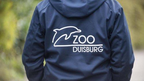 """Zoo Duisburg: Pfleger machen eine schockierende Entdeckung – """"Wer kommt denn auf solche Ideen?"""""""