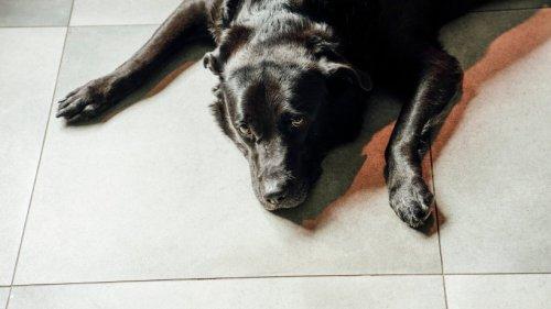 """Hund: Ordnungsamt kennt kein Erbarmen – Vierbeiner """"Joko"""" wird von seinem Lieblingsplatz verbannt"""