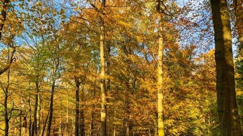 Wetter in NRW: Neue Chance für Goldenen Oktober? Bald könnte die Sonne wieder durchbrechen