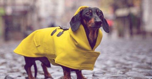 Hundstage 2021: Trifft die Bauernregel dieses Jahr nicht zu? | desired.de