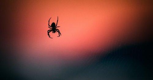 DIESE Pflanze vertreibt alle Spinnen aus deiner Wohnung!