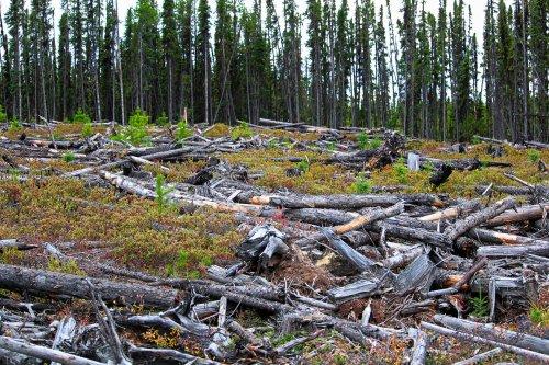Zurück zum Thema | Forstwirtschaft – Wälder im Stress: Was macht die Holzindustrie? | detektor.fm – Das Podcast-Radio