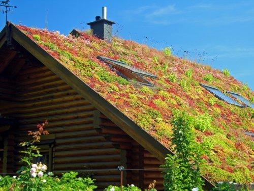 Mission Energiewende | Gründächer – Eine natürliche Klimaanlage auf dem Dach | detektor.fm – Das Podcast-Radio