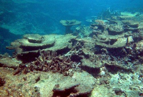 Zurück zum Thema | Great Barrier Reef – Hat das Great Barrier Reef noch eine Zukunft? | detektor.fm – Das Podcast-Radio