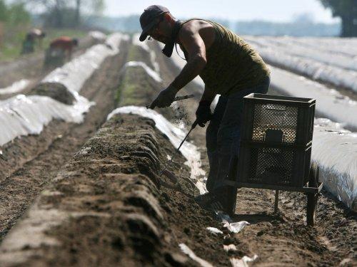 Zurück zum Thema | Erntehilfe – Wie geht Erntehilfe in der Pandemie? | detektor.fm – Das Podcast-Radio