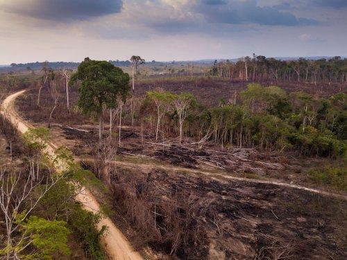 Mission Energiewende   Corona und Umweltzerstörung