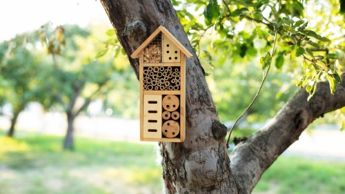 Mission Energiewende | Insektensterben: Immer mehr Arten gefährdet
