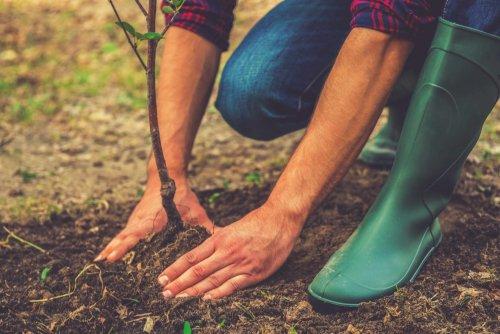 Mission Energiewende | Klimafreundlicher Ackerbau – Ackern für das Klima | detektor.fm – Das Podcast-Radio