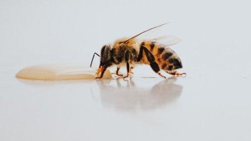 Herkunft von Honig soll besser gekennzeichnet werden