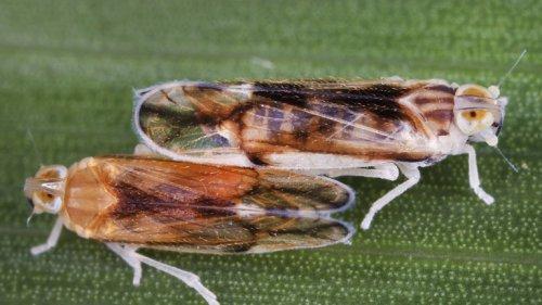 Billionen Zikaden schlüpfen bald