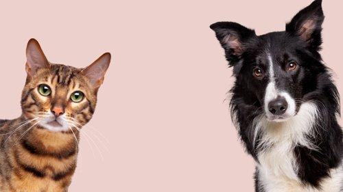 EU-Entscheidung: Haustiere dürfen weiterhin Antibiotika erhalten